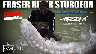 Canada Chronicles - Fraser River Sturgeon ft. Fishing with Rod & Kanalgratis.se