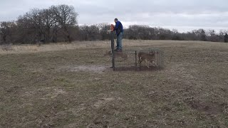Rescuing Deer From The Trap