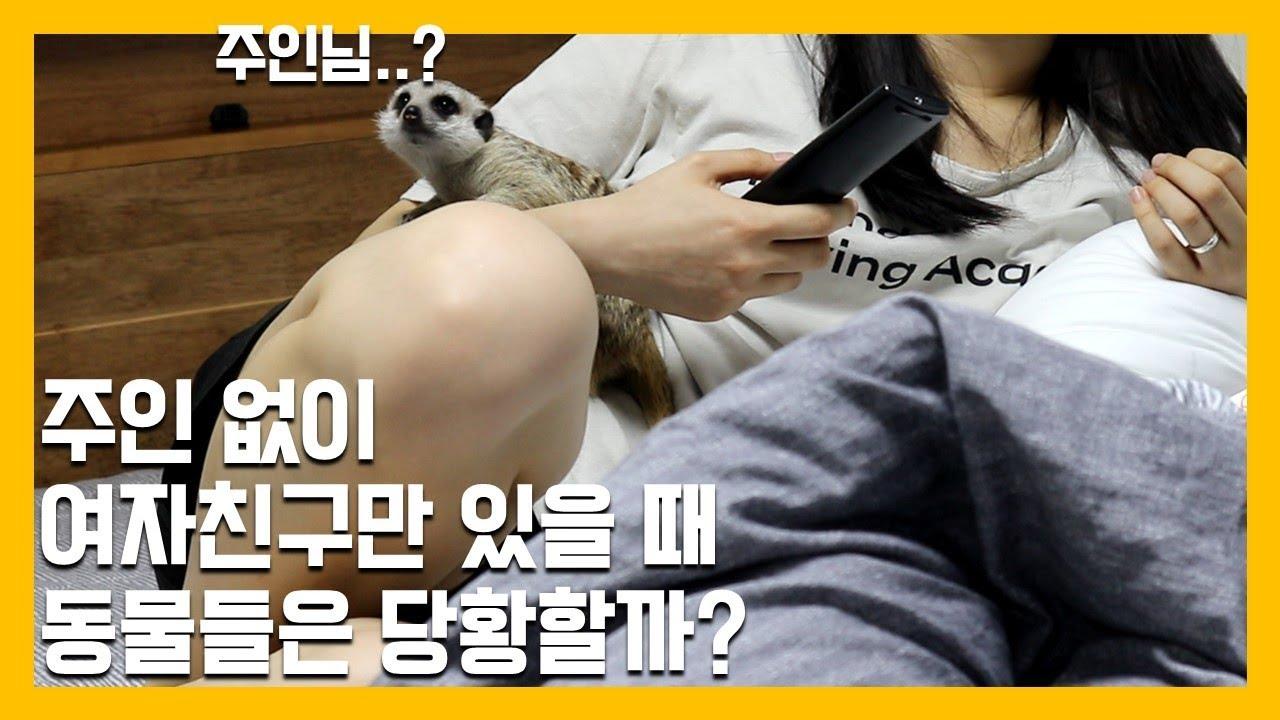 애완/반려동물                                       소닉이와 피츄 그리고 꾸릉