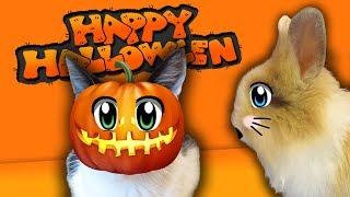 КОТ МАЛЫШ и ТЫКВА на ХЭЛЛОУИН l КРОЛИК БАФФИ и Halloween 2017 l Кошечка МУРКА и Хеллоуин стайл