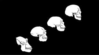 Evolution - Mysteries of Human Evolution