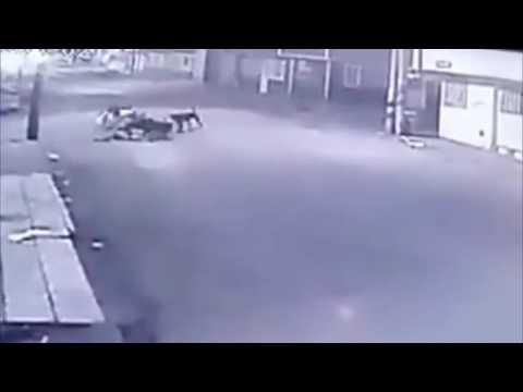 女子突然遭一群流浪狗襲擊,下一秒差點被拖走!驚嚇!