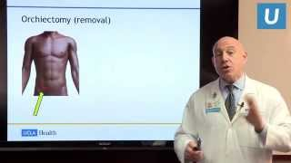 Testicular Cancer: Facts and Fictions | Mark S. Litwin, MD | UCLAMDChat