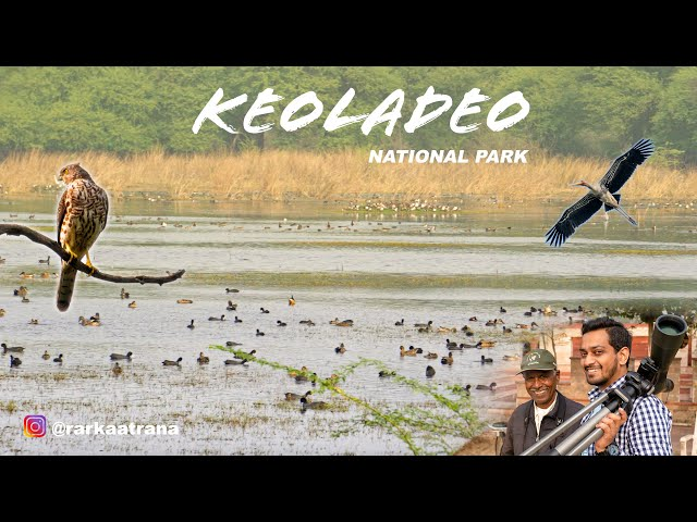 Video Pronunciation of Keoladeo in English