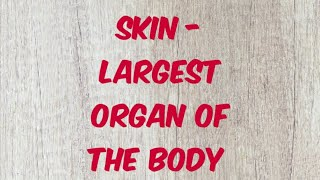 Skin / Largest organ of body / layers of skin / epidermis / dermis / learn with fun / dermatology