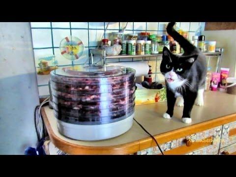 Katze Leckerli Cat Treats Dörrautomat Dörrfleisch AntiAllergic Barf Chicken