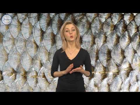 Рыбы: общая характеристика и внешнее строение