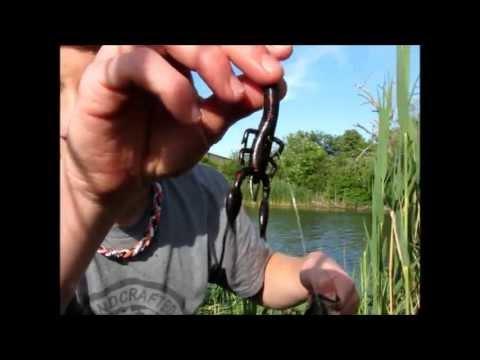 Pond bass fishing (5/25/13)