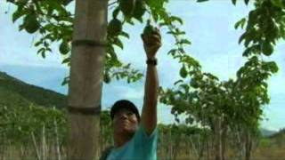preview picture of video 'POR COLOMBIA TORO VALLE.mpg'