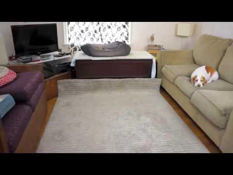 Подарок собаке на день рождение