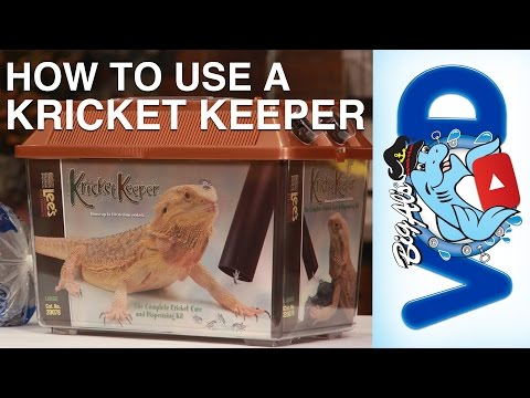 How To Use Lee's Kricket Keeper (Video)
