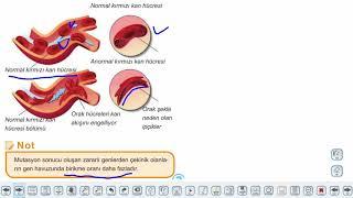 Eğitim Vadisi 10.Sınıf Biyoloji 12.Föy Genetik Varyasyonlar ve Biyolojik Çeşitlilik Konu Anlatım Videoları