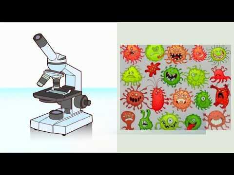 Significado de oxiuros en biologia