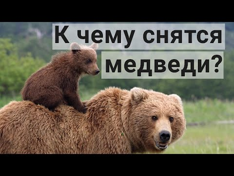 К Чему Снится Медведь? Толкование Сна С Медведем.