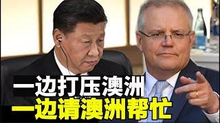 中共游说澳洲为加入CPTPP贸易协定,中共贸易报复澳洲未果,上半年澳洲对华出口创新高【时事追踪】