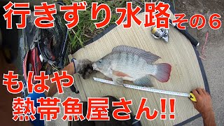 ナマズ釣り?!行きずり水路で謎の魚!その6~熱帯魚屋のキレイな魚!?~066虫くん釣りch