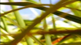 Christopher Bissonnette - Travelling Light