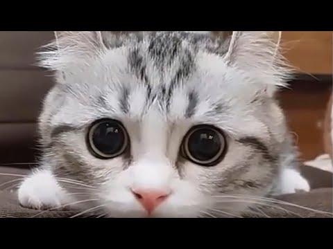 PETS DIVERTIDOS! Gatos, Cachorros e Pets Super Fofos e Engraados.
