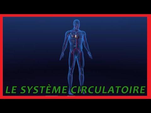 Les yeux de lhypertension intracrânienne