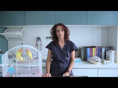 La gestione del pappagallo