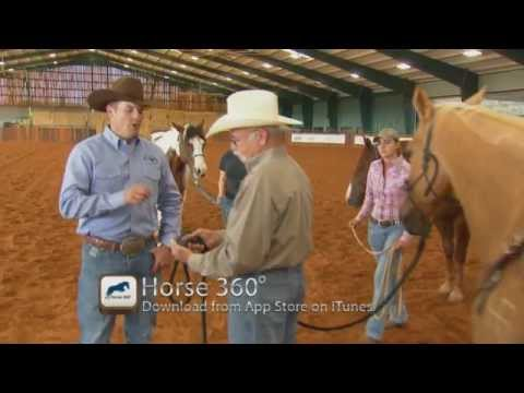 Video of Horse 360