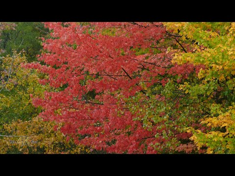 Canada fall foliage and bird migration one hour compilation