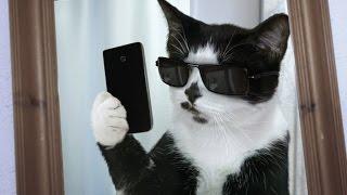 Приколы с котами и кошками для поднятия настроения!