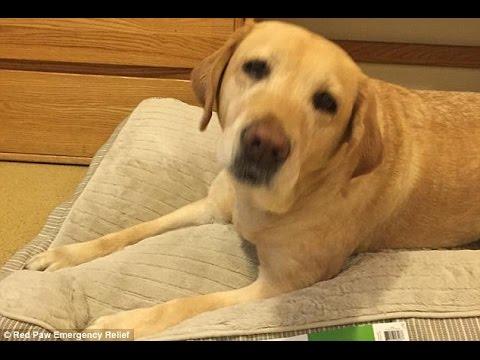 警铃大作 听筒竟传狗叫 警方迅速调查 确认狗在报警