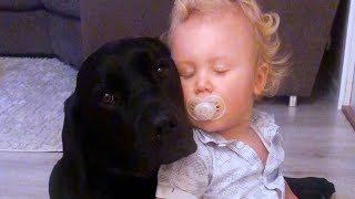 Little Boy Can't Go To Bed Without Hugging His Favorite Dog | The Dodo