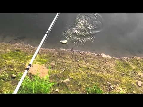 Early Morning Topwater Bass Fishing