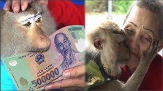 """Chuyện chú khỉ mang về tiền triệu cho người chủ già mỗi ngày để trả ơn gây """"sốt"""" MXH"""