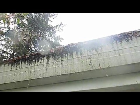 Leafless In Seattle Gutter Guards Youtube Videos