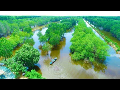 Trải nghiệm NÔNG TRẠI TÔM KHỎE. Vĩnh Hậu, huyện Hoà Bình, Bạc Liêu qua góc nhìn Flycam