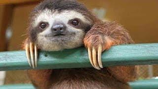 Cute Baby Sloth Rescue