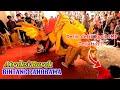 Download Lagu Atraksi Burok Bintang Panorama live mertapada Mp3 Free