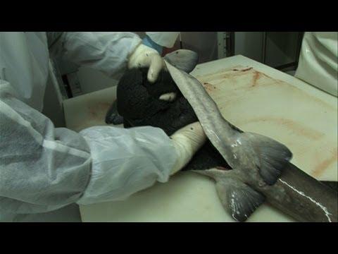 Tratamento de psoríase de cedro