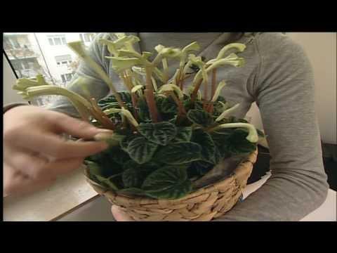 Blumendeko für das Fenster: Blumen als Gardinenersatz