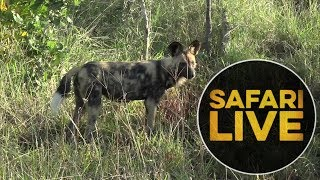 safariLIVE - Sunrise Safari - May, 24. 2018