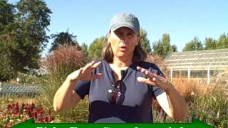 Watering Your Perennial Plants in the Fall- How Important is This?