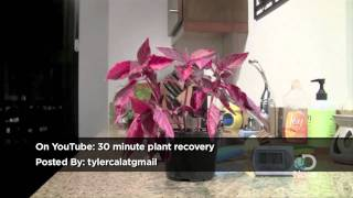 30 Minute Plant Recovery Explained