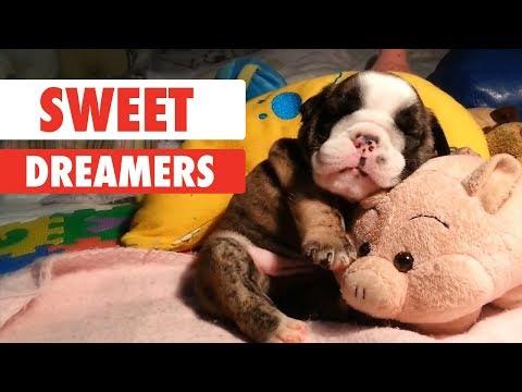 Cute Animals Having Sweet Dreams