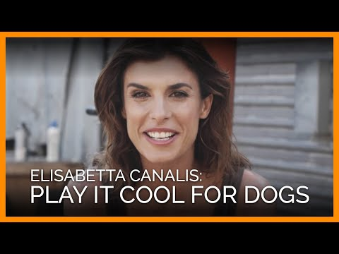 Plays It Cool for Dogs (PETA App)
