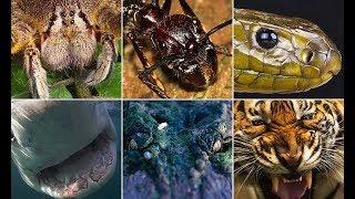 Самые опасные в животные в мире