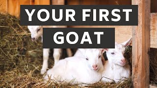 What you need ready for your first goat   Prepare for Goats!   New Goat Owner Supplies   Goat Care