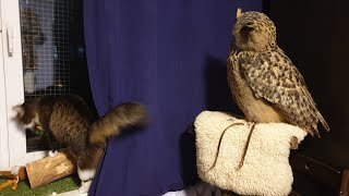 """""""Uhoo"""" on an owl's throne. Yoll the Queen. And she is still afraid of rats"""