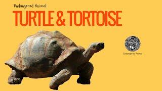 Endangered Animals Turtle & Tortoise: Science & Education of Endangered Animals Turtle & Tortoise