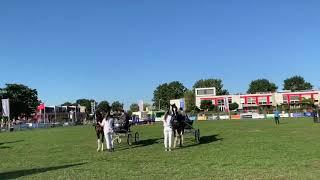 Dylano Nederlands Kampioen 2019 (1)