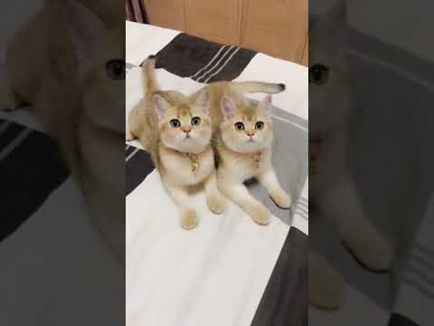 【抖音】寵物合集19 - 可愛的喵星人