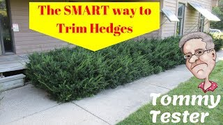 The SMART way to trim Hedges | Lawn Care | Shrubs | Evergreens