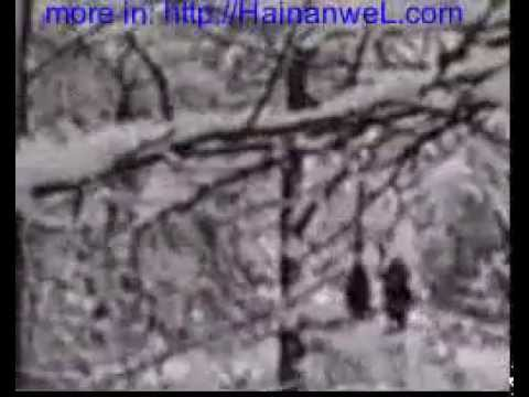 Adygea Russia Bigfoot Video